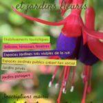 <Strong> Jury du concours des maisons et jardins fleuris </Strong>